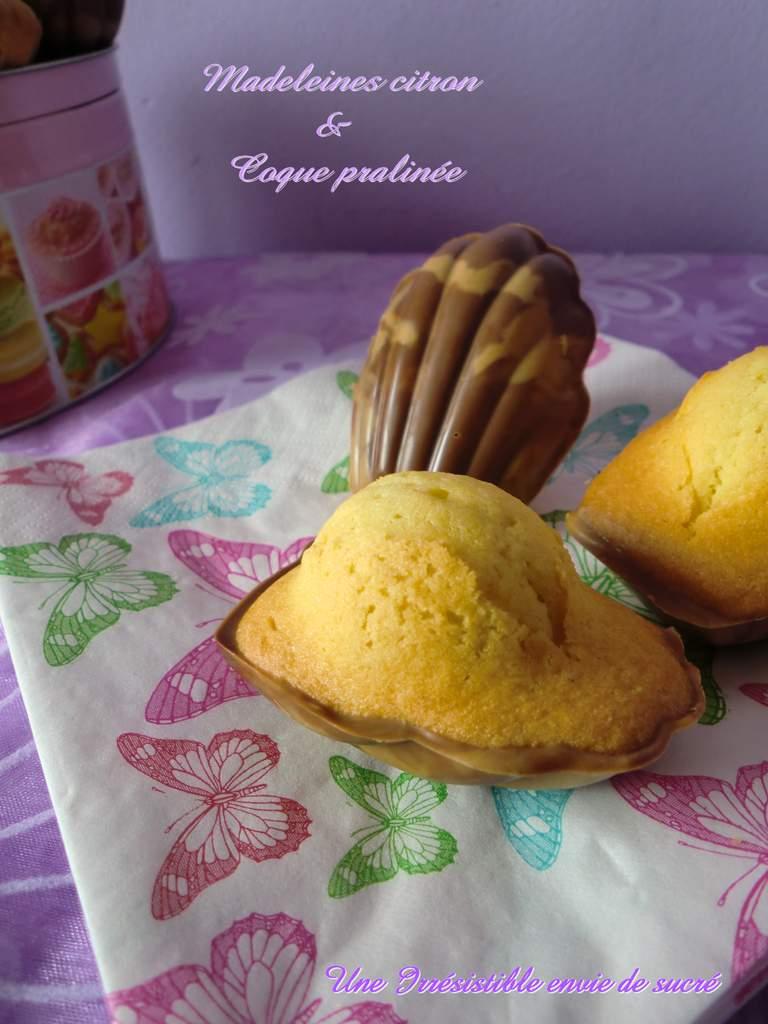 Madeleines citron &amp&#x3B; Coque chocolat praliné